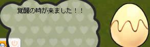 041109piyo1.jpg